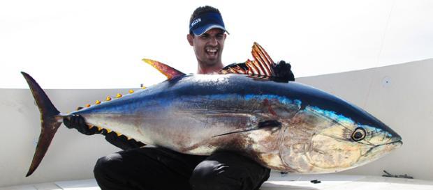 Las mejores cañas para pescar atunes a Spinning | el pez rosa - elpezrosa.com