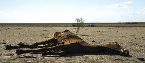 Animal morto em razão da seca na cidade de Sobradinho (BA) (Foto: Marcello Casal Jr/Agência Brasil)