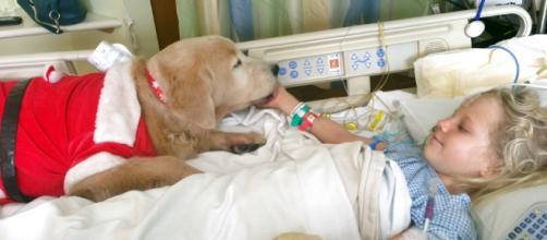 Los científicos revelaron que la genética puede jugar un papel muy importante en el por qué los perros se comportan de manera amistosa hacia