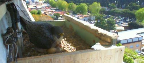Mejores 13 imágenes de proyecto bird cam | Animales - pinterest.es