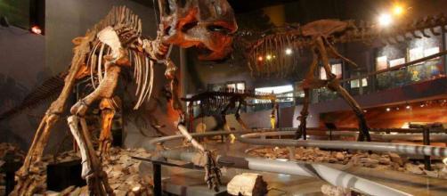 Un un joven descubrió accidentalmente los restos fosilizados de un Stegosmastodon de 1,2 millones de años en Nuevo México