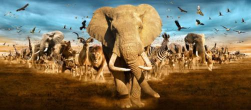 Especies migratorias vulnerables y en posible peligro de extinción