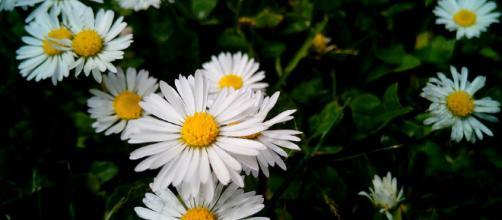 De las flores a los copos de nieve: los temores más extraños que existen