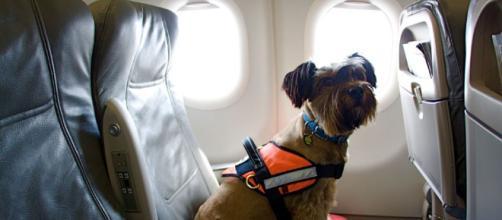 ¿Estás planeando un viaje con tu mascota? Considere estas tapas para un viaje sin problemas