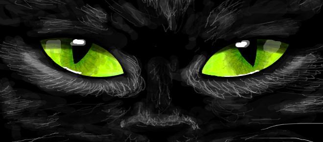 Gato preto: Caminhando entre o bem e o mal. Entenda