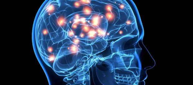 Por qué el cerebro humano es tan diferente al de los animales ... - elconfidencial.com