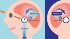 L'importanza del sonno: i consigli degli esperti e la genetica