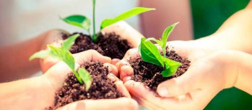 a mejorar el medio ambiente ¡desde tu casa! - thehappening.com