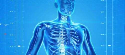 Ecco un nuovo organo del corpo umano: l'interstizio - Wired - wired.it