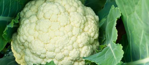 La coliflor es una variedad de col, considerada la más exquisita entre todas ellas