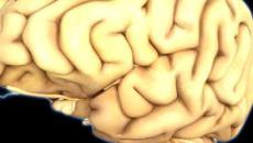 Los investigadores están desarrollando un novedoso cerebro electrónico