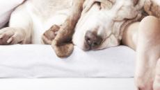 ¿Tienes problemas con el sueño? Tu perro puede ayudarte