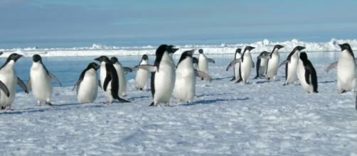 Adelie penguin are known for being pranksters, and scientists just found 1.5 million of them hiding in plain sight. - [BBC / YouTube screencap]