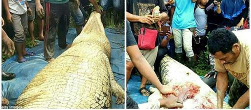 Restos humanos são encontrados dentro de crocodilo
