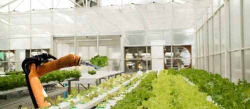 Robots en el campo: ¿el futuro de la agricultura de la UE?.