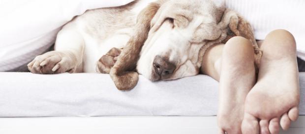Es bueno que duermas con tu mascota? - The Luxonomist - theluxonomist.es