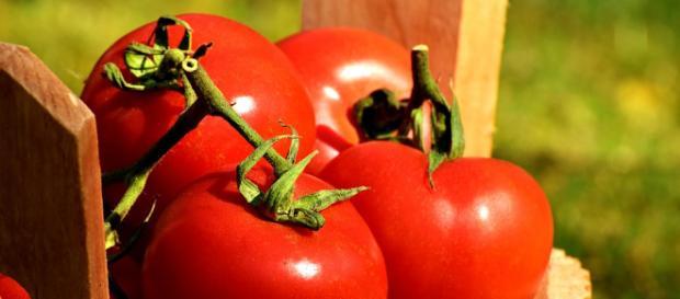 Sembrando tomates en casa de la mejor forma