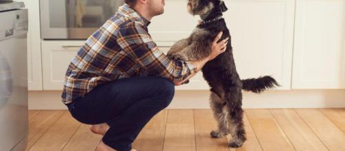Cómo hablar con mi perro? - Consejos para una buena comunicación - expertoanimal.com