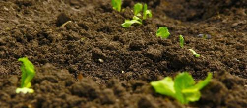Consejos para regular el pH del cultivo