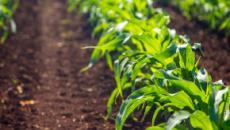 ¿Cómo hacer, obtener y certificar su granja al (SQNPI)?