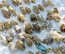 54 de mâini omenești tăiate au fost găsite aruncate într-o pungă și acoperite cu gheață în Siberia - Foto: Daily Mail ( © The Siberian Times)