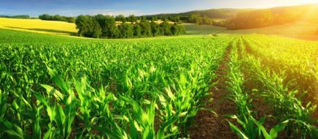 La agricultura protegida, el futuro del campo mexicano