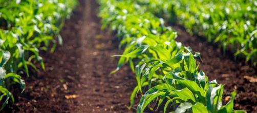 El sector agrícola y las zonas rurales de la UE contribuyen de manera fundamental al bienestar y al futuro de la Unión.