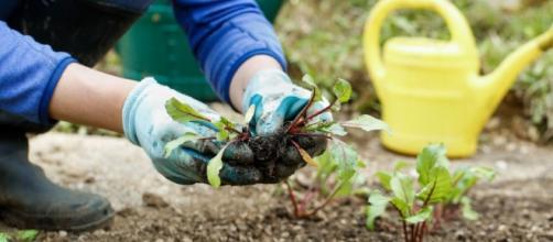 Los fertilizantes Pro-eco tienen muchas ventajas, y algunos de ellos mejoran las propiedades microbiológicas del suelo.