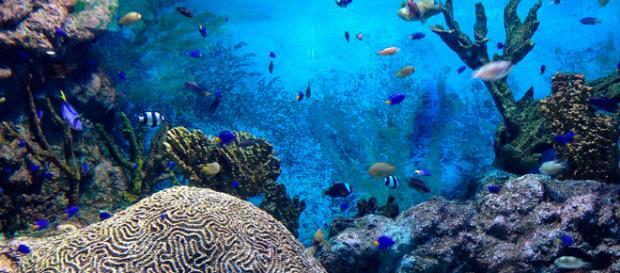 Arrecifes de coral de vidrio inusuales de Canadá designados como áreas protegidas.