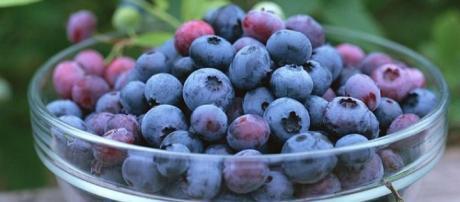 lo que los arandanos hacen por nuestra salud| Salud - facilisimo.com