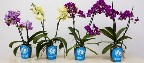 """Il 21e 22 aprile 2018 UNICEF ha raccolto i fondi a sostegno dei """"Bambini Sperduti"""" vittime di violenze, conflitti, povertà e calamità. (Foto:web)"""