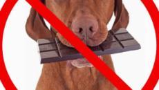 5 alimentos que podem matar um cachorro.
