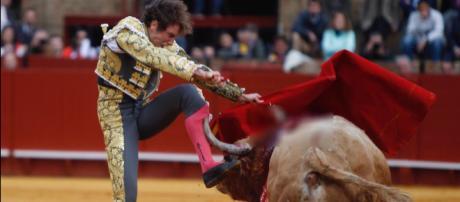 Román Collado sofreu uma chifrada em sua perna durante tourada (Crédito: Twitter/Román Collado)