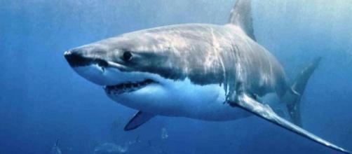 Los tiburones utilizan sus hombros para comer • El Nuevo Diario - com.ni