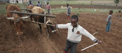 Trabalho infantil ainda é comum no Brasil
