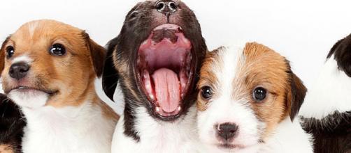 20 curiosidades sobre cachorros.(Foto/Reprodução via Blasting News)