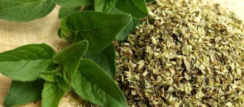 Beneficios que te aporta el orégano | Plantas - facilisimo.com