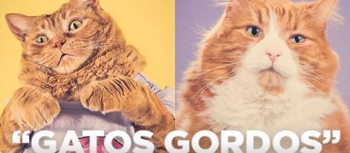 Gatos gordinhos como você nunca viu em fotos