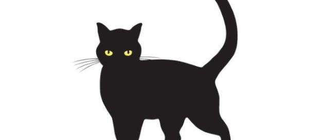 Algumas pessoas acreditam que gato preto traz azar