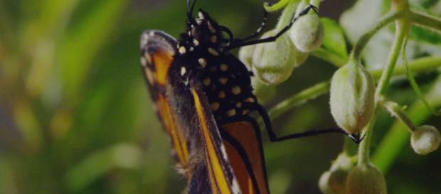 La fragilidad de las mariposas