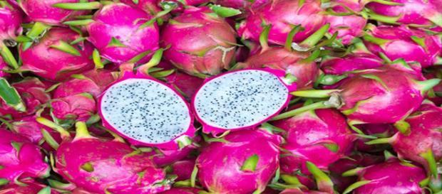 Pitaya é rica em nutrientes e combate várias doenças.