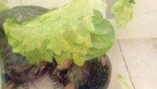Genova, trovano topo nella busta dell'insalata: dettagli e lotto nel mirino