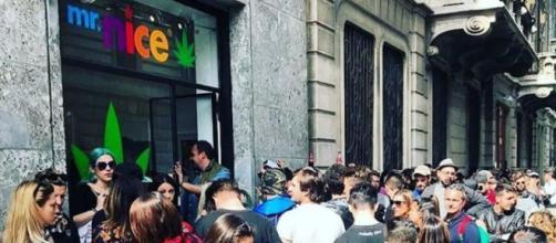 Il negozio di marjuana di J-Ax in via Bertini a Milano, l'unico in cui la sostanza sia venduta legalmente.