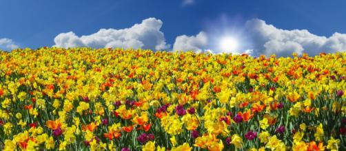 Junto a la primavera llega la rinitis, ¿sabes cómo tratarla?