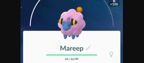 Mareep en el Día de la Comunidad de Pokémon GO.
