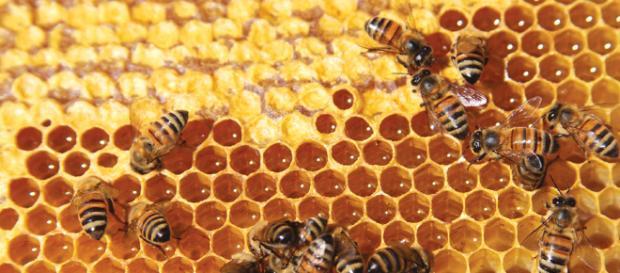 La magia de las abejas y su miel - forummexico.mx