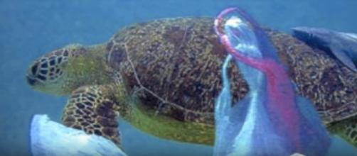 Mankind's use of plastic is having a deleterious effect on marine life.[image source: oceanpollutionpatch - YouTube]