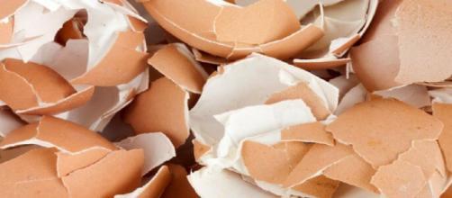 Usos que puedes darle a los cascarones de huevos