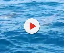 Salento, un video bellissimo nel mare.