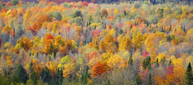 Environment - Rob Taylor via Flickr
